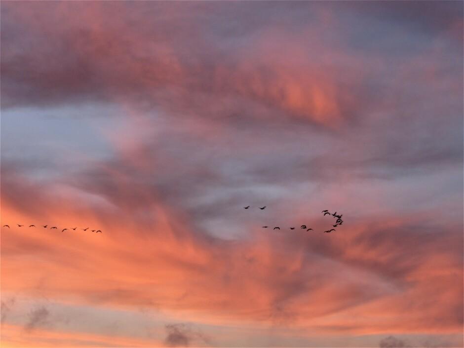 Vogels in het ochtendrood