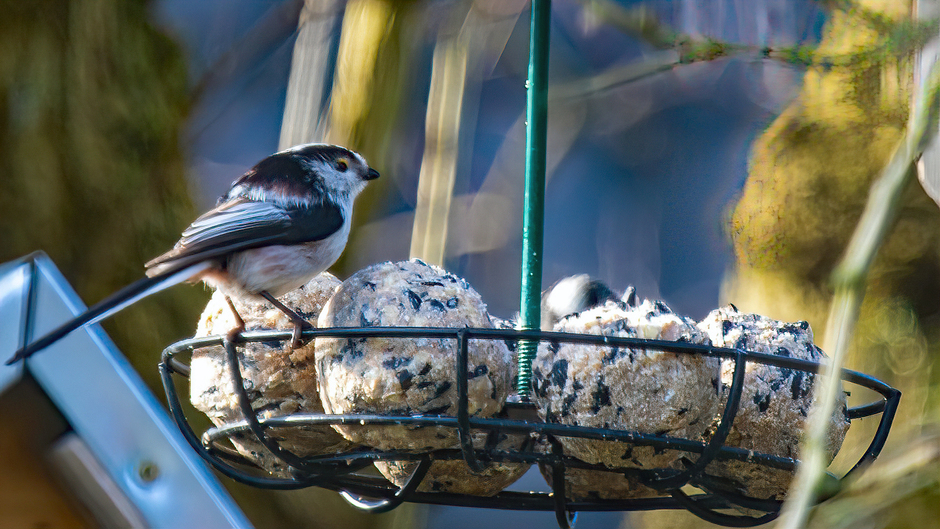 Nationale Vogeltelling