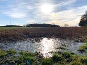 Icy puddles and winter sunshine