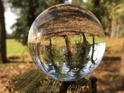 Mystical Woods through a photography ball