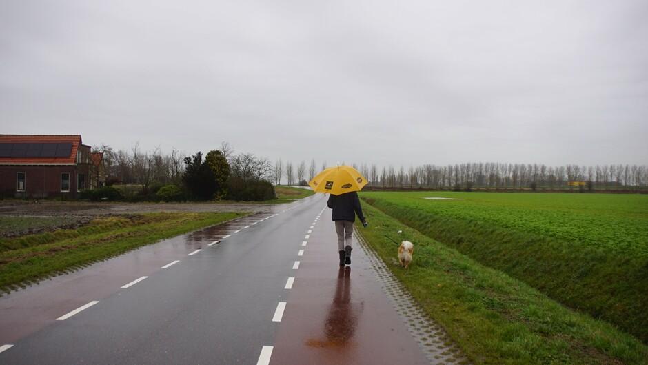 paraplu weer grijs en regen even de hond uitlaten 10.23 uur 9 gr