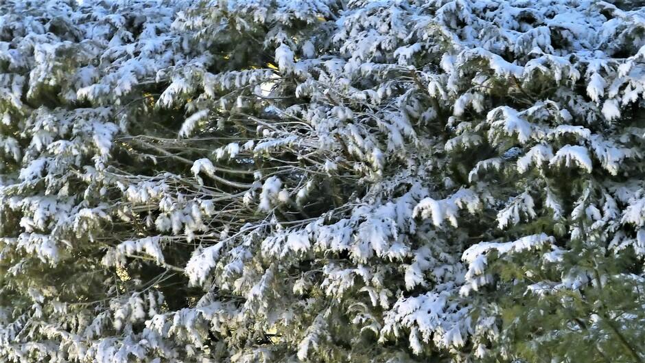 06-02-2021 Gorinchem 23:25 Hoeveel sneeuw zal er zondagavond liggen