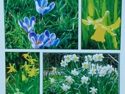 Sidmouth Spring Collage