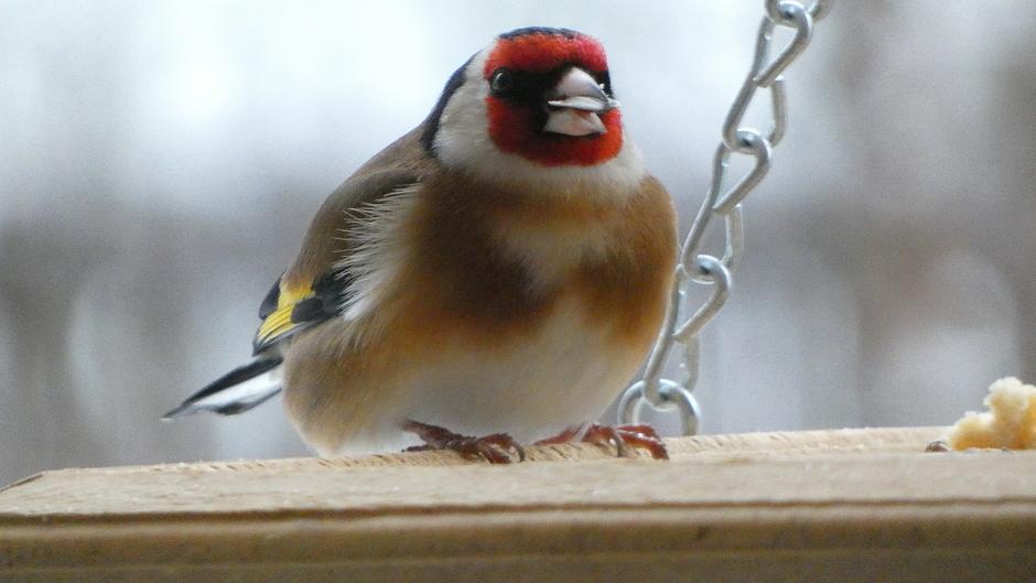 Vogelvoer niet aan te slepen