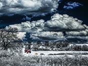 Snowy Norfolk
