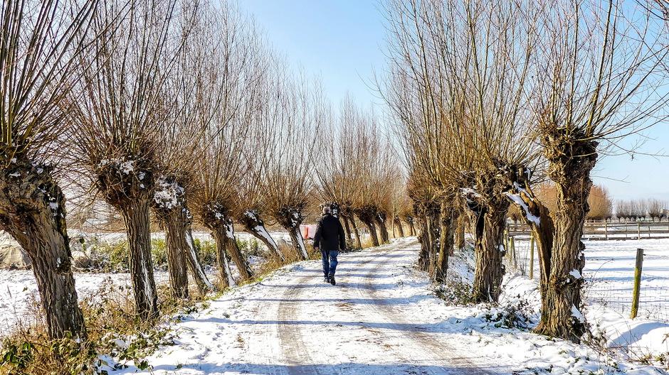 Zonnig winterlandschap met ijsblauwelucht