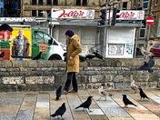 Fowl-weather Friends?