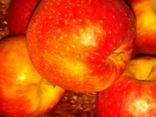 Juicy Red Apples Project 52