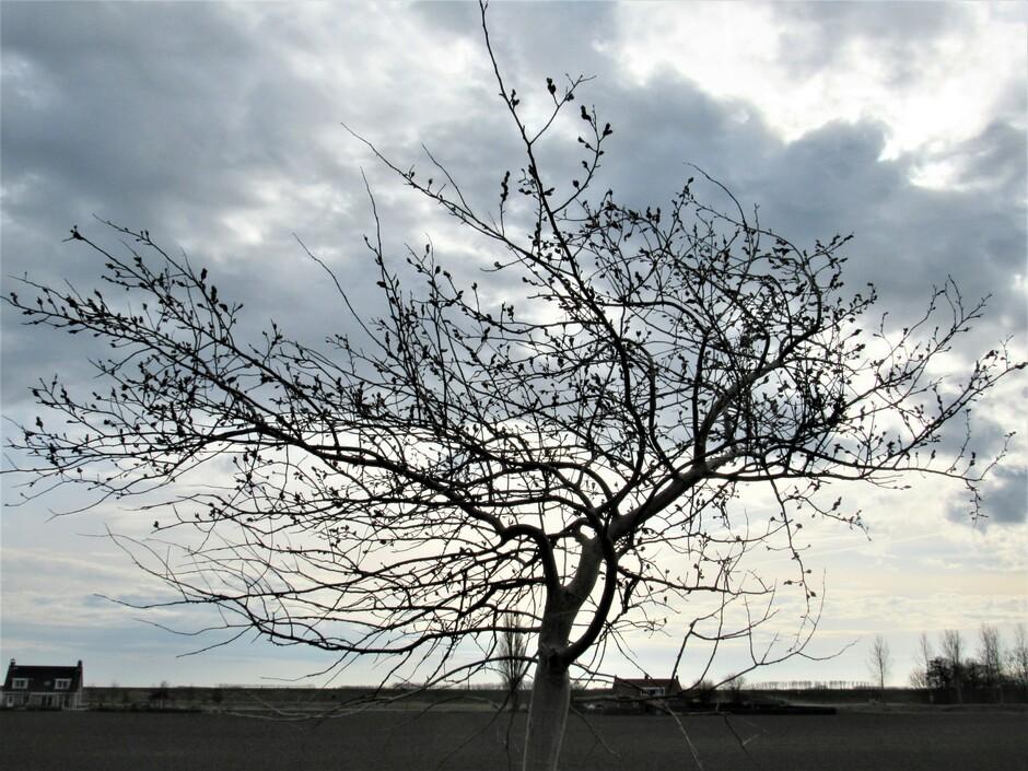 Stevige wind bij een donkere wolkenlucht, ook mooie wolkenluchten