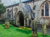 Spring daffodils at Sidmouth Parish Church