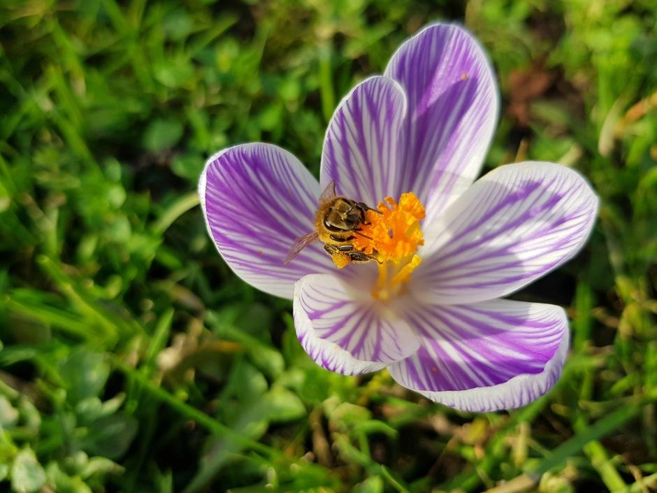 Een mooie lente dag.
