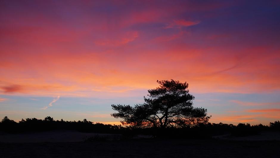 Vlak voor de zonsopkomst