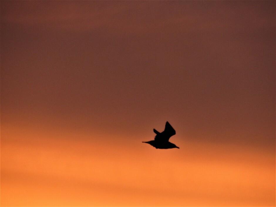 Vrij als een vogel in het prachtige ochtendlicht