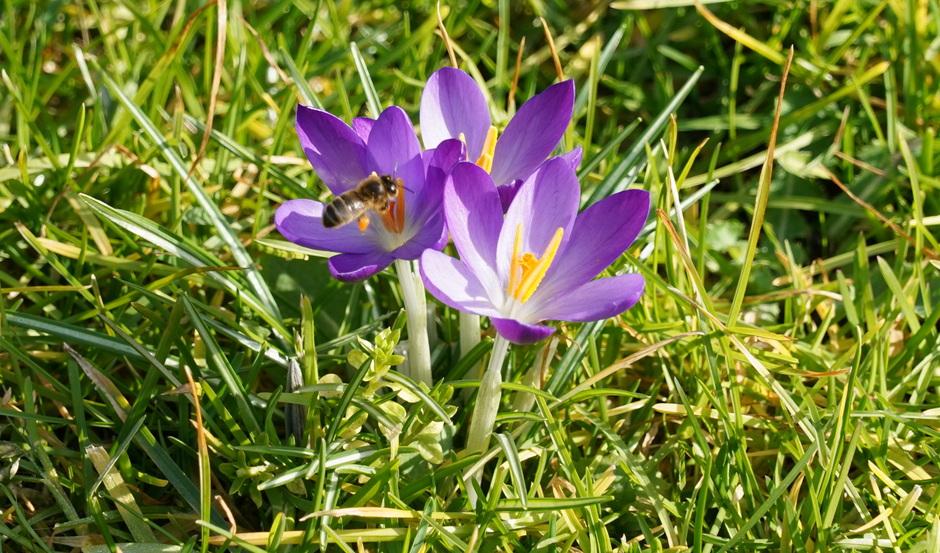 De bloempjes en de bijtjes