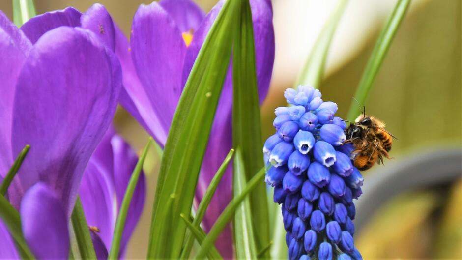 Knuffelbijen met Lentekriebels