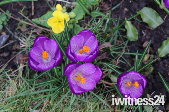 Photo Challenge.  Project 52  Signs of Spring