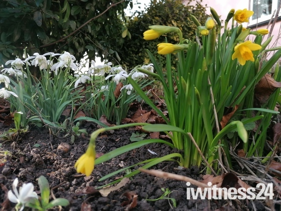 Uncovering spring flowers