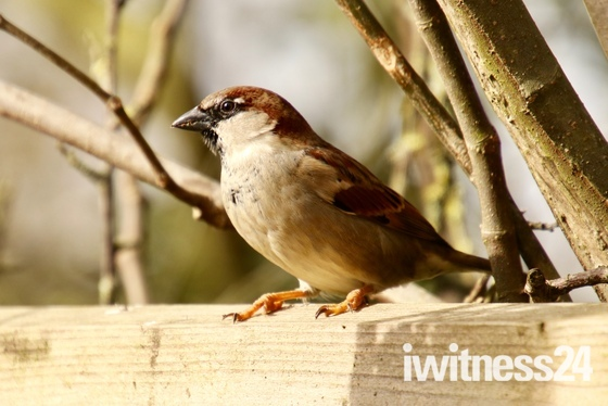 Garden birds enjoying the sunshine