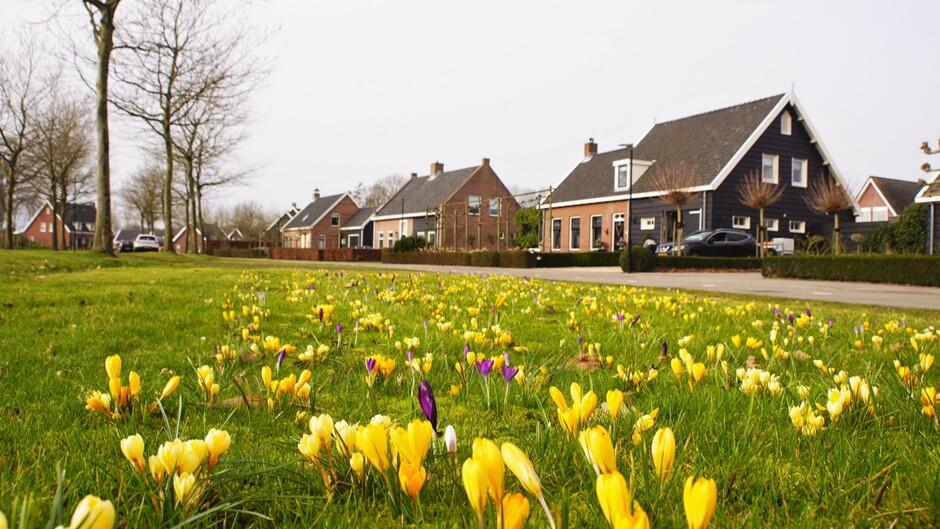 zon grijsblauwe lucht 12 gr krokusjes in bloei beetje lente