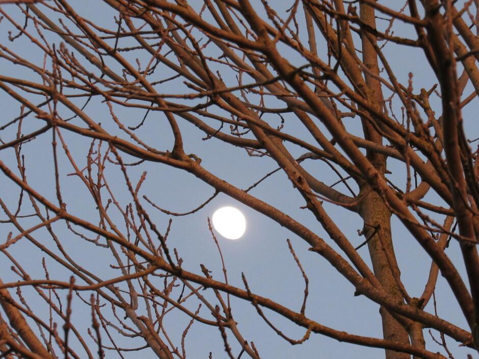 Het avondlicht schijnt op de boom en de maan verschijnt.....fijne avond