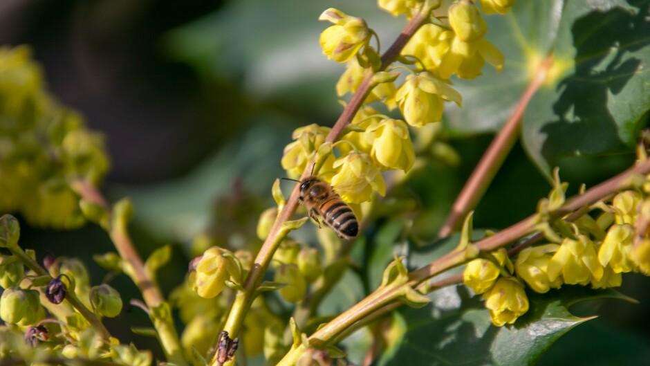Honingbijtje