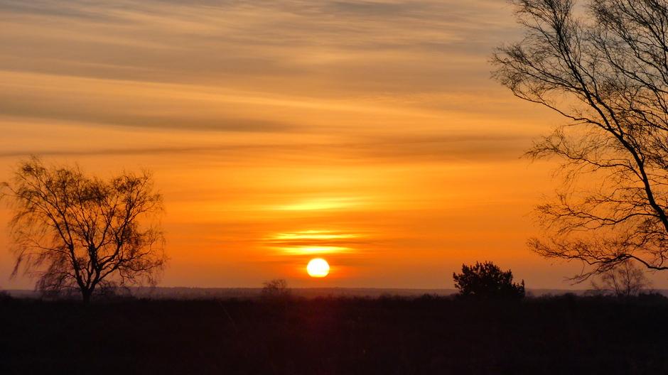 Ermelose hei bij zonsopkomst