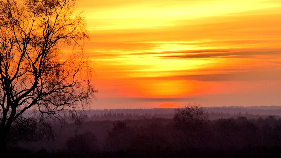 Ermelose hei bij zonsopkomst vanmorgen