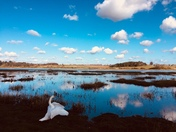 Swans eye view of the river Deben