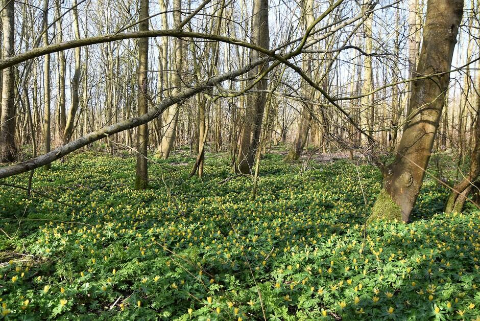 Bloementapijt in het bos