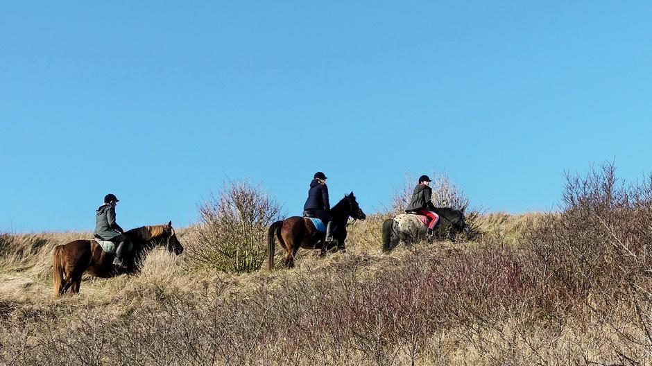 Zon en paardrijden