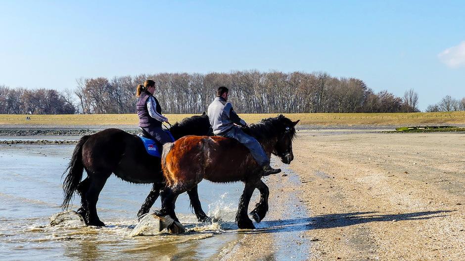 Zonovergoten dag voor paardenritje