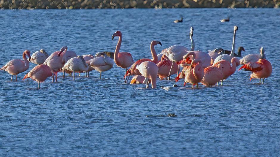 Flamingo's in het late middagzonnetje