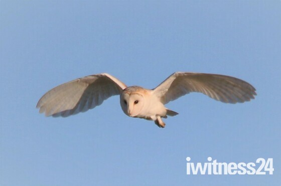 Barney OWL over Oulton Marshes