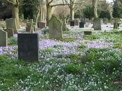 Spring Earlham Cemetary