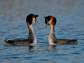 Amazing wildlife of Havering