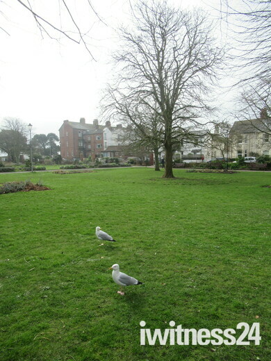 Two seagulls in Manor Gardens, Exmouth