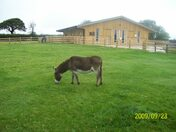 Sidmouth Donkey Sanctuary - 23rd September 2009