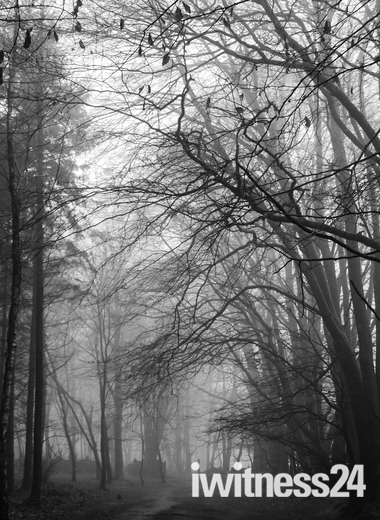 misty and muddy woodbury common today
