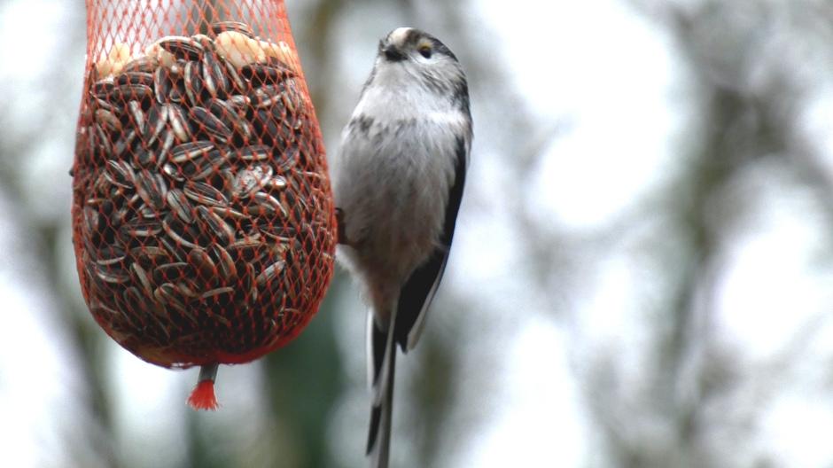 Koude periode komt er weer dus vogels bijvoeren