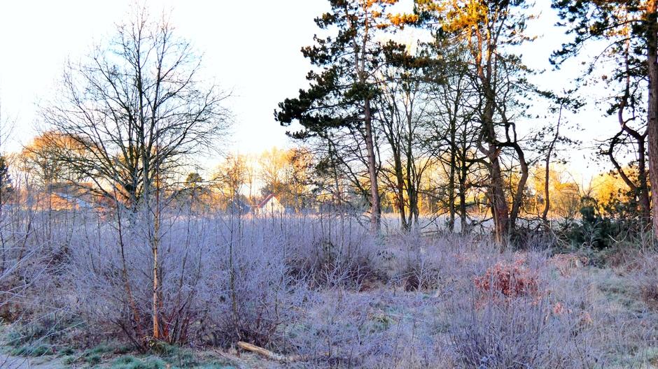 Na de zonsopkomst nog vorst op de takken in het bos