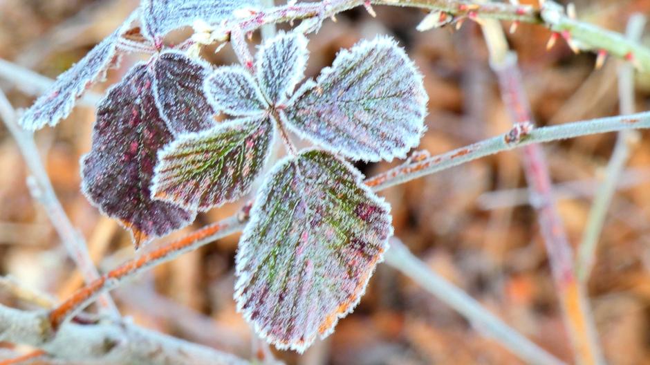 Bevroren blad in het bos