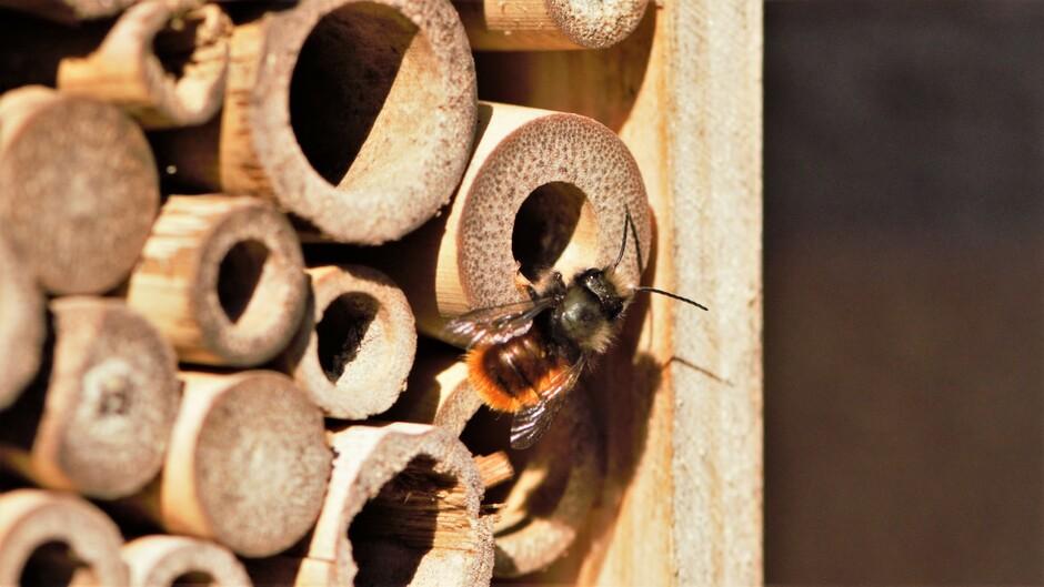 Jaaaah mijn eerste knuffelbijen zijn ontwaakt uit hun winterslaap. Het is Lente!