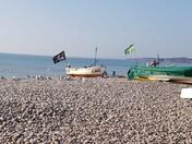 Seagull Breakfast on Budleigh Beach
