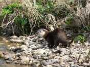 Otter on the River Otter