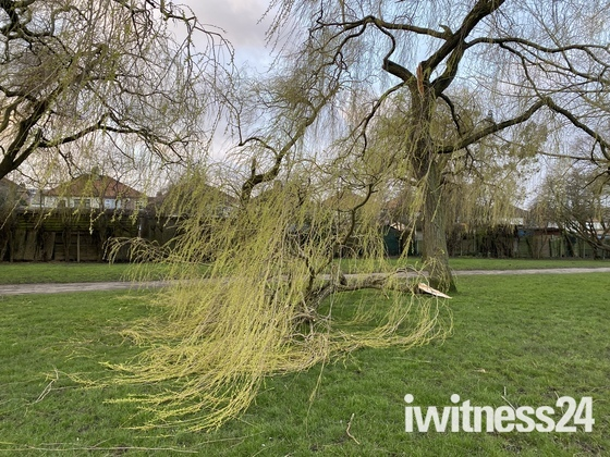 Trees blown down in storm in Hylands Park, Hornchurch