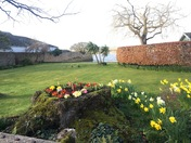 Spring flowers in Topsham