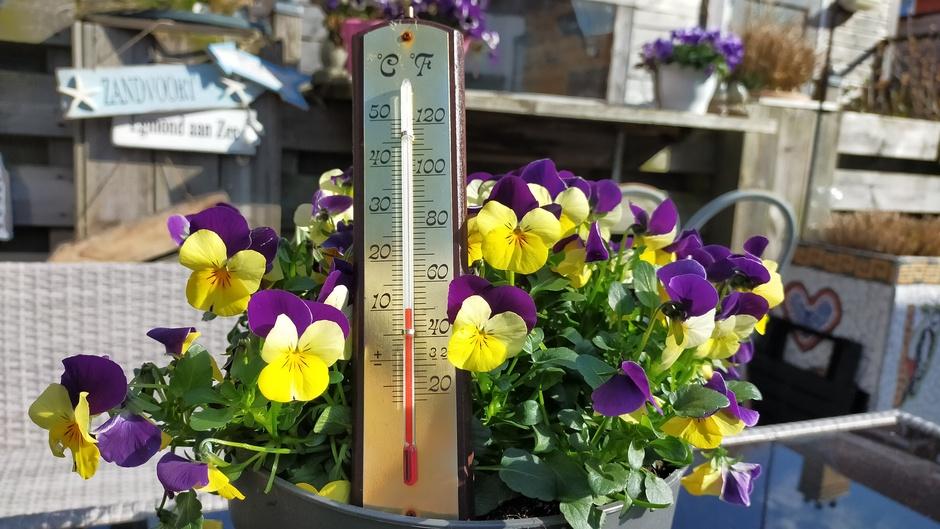Bak met violen en thermometer