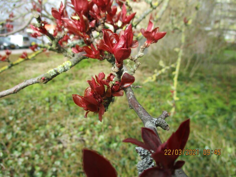 Hier geniet ik weer van de  jonge lente bloei