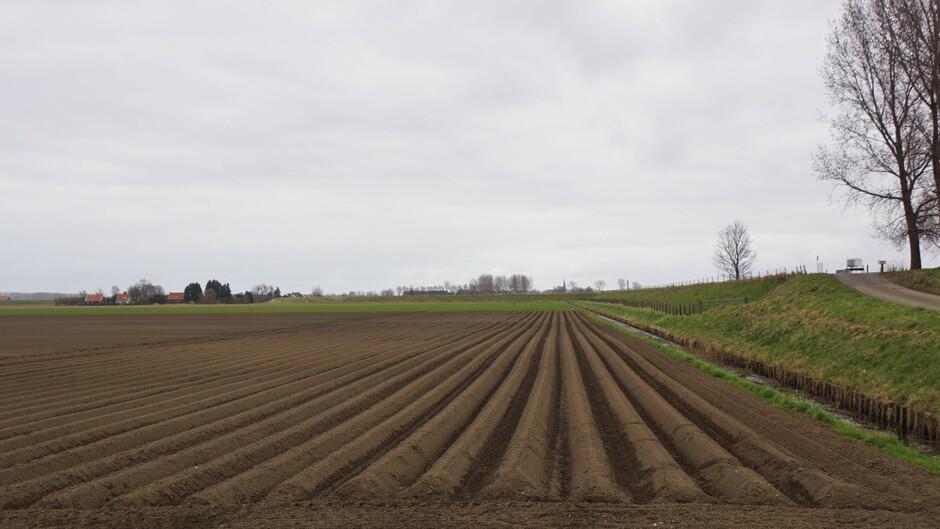 grijs weer in de polder met rechte aardappelruggen  op het land 7 gr