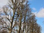 Springtime in Nowton Park